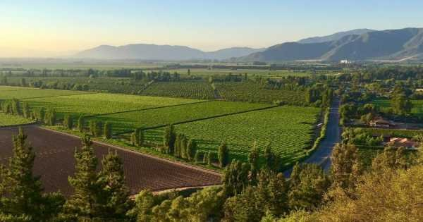 Colchagua Valley and Its Wines
