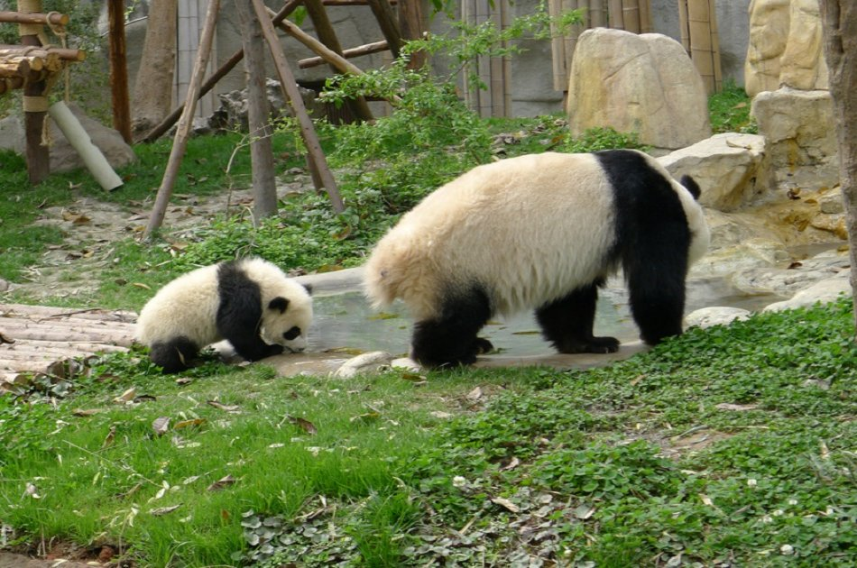 Chengdu Private Tour of Everything Panda Experience