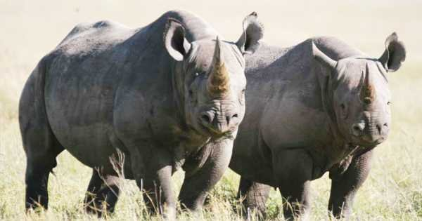 Great Migration Safari 4 Day Tour From Arusha To Serengeti National Park