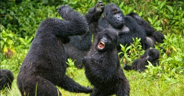 8 Days Private Tour in Uganda Forests
