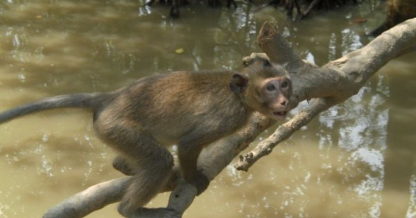 Can Gio Ecologic Area Tour - Monkey Island from Ho Chi Minh